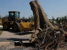 tree stump removal services in Sydney