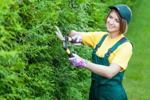 gardening-services-adelaide